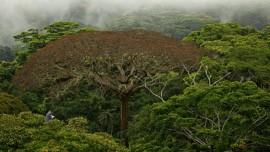 Le film de Luc Jacquet honore les forêts, poumons verts de la Terre.   Photo de VIFF
