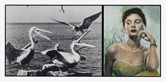 Pelicans Staring at Woman with Nose Bleeding par John Baldessari. | Photo par John Baldessari